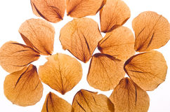 Isolated rose petals. On white background Stock Images