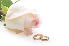 Isolated rose and wedding rings Stock Image