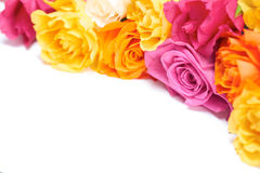 Isolated Roses Royalty Free Stock Images