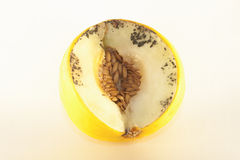 Isolated rotten melon. Isolated, yellow, rotten melon, on white background Stock Photo