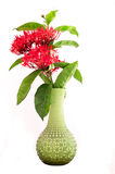 Isolated rubiaceae in green vase. Using for decoration Stock Image