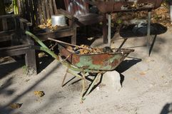 Isolated rusted wheelbarrow with leaves and without wheels royalty free stock image
