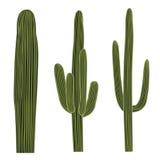 Isolated Saguaro Cactus Set Royalty Free Stock Image