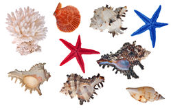 Isolated sea invertebrates collection. Set of sea invertebrates isolated on white background Stock Photography