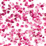 Isolated Seamless Rosa Rose Petals. Repeating pattern of studio photographed, rosa rose petals, isolated on absolute white Royalty Free Stock Photography