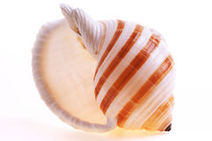 Isolated seashel Stock Photography
