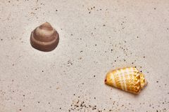 Isolated seashell in the sand stock photography