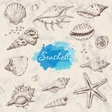 Isolated seashells on a beige background. Vector illustration for your design Stock Photos