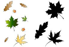 Isolated Series : Leaves [VECTOR] Royalty Free Stock Photos