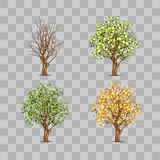 Isolated set of trees in different seasons Stock Photo