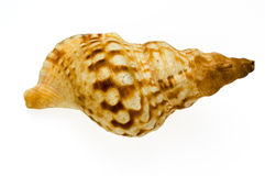 Isolated shell. On white background stock photos