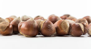 Isolated shelled nuts. Shelled nuts on white background Royalty Free Stock Images