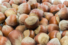 Isolated shelled nuts. Shelled nuts on white background Stock Image