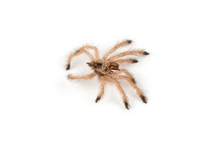Isolated shoot of spider`s molt Stock Image