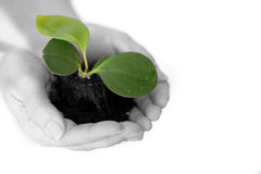 Isolated shot of a fresh plant Stock Photo