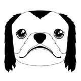 Silhouette of a pekingese avatar. Isolated silhouette of a pekingese avatar. Dog breeds. Vector illustration design Stock Images