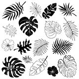 Isolated silhouettes of tropical palm leaves, jungle leaves Royalty Free Stock Photography