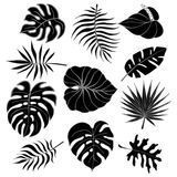 Isolated silhouettes of tropical palm leaves, jungle leaves_2 Stock Photography