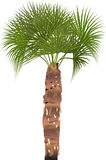 Isolated single palm tree illustration Stock Photography