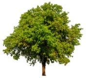 Isolated single tree