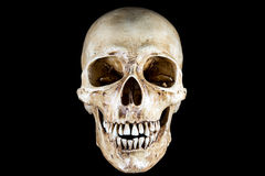 Isolated Skeleton head Royalty Free Stock Photo