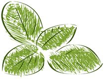 Isolated sketch of basil Stock Images