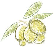 Isolated sketch of olives Royalty Free Stock Photo