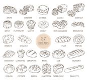 Isolated sketches of bread types. Set of isolated sketches of breads. Loaf of arepa and sliced ciabatta, cesnica and muffin, donut or doughnut, hot cross bun and Stock Photos