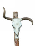 Isolated Skull Royalty Free Stock Photo