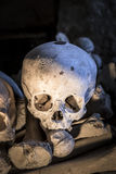 Isolated skull in Fontanelle cemetery. Royalty Free Stock Photo