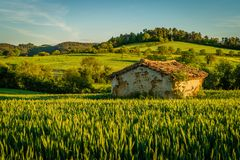 Isolated small house in a wheat field. At sunset in France Royalty Free Stock Photo