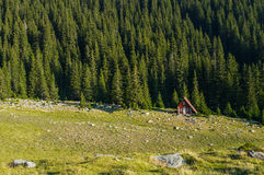 Isolated small refuge in the mountains. Surrounded by pine trees, Carpathians, Romania Stock Images