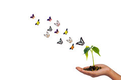 Isolated small tree on hand and butterflies Stock Photography