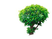 Isolated small tree stock image