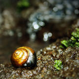 Isolated snail near water Stock Photo