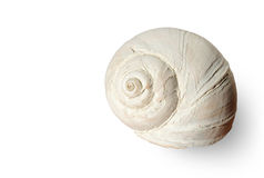 Isolated snail shell Royalty Free Stock Images