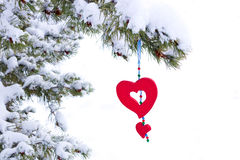 Isolated snowy christmas tree red heart decoration. Single red heart shaped Christmas or Valentines ornament hanging from snow covered winter branch of pine tree Royalty Free Stock Photos