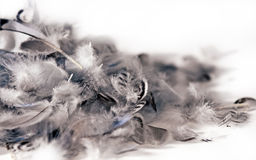 Isolated soft feathers Stock Photography