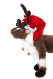 Isolated soft toy: Reindeer Rudolph with red christmas hat. Stock Image