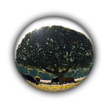 Isolated sphere with cows on countryside Stock Images