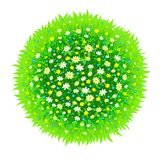 The isolated sphere from a green grass and flowers Stock Photos