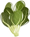 Isolated spinach beet Stock Photography