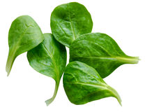 Isolated Spinach Salad Leaves Royalty Free Stock Photo