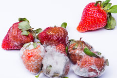 Isolated spoiled strawberry Royalty Free Stock Images