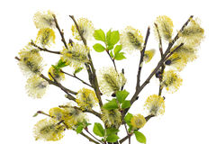 Isolated spring Royalty Free Stock Photo