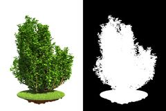 Isolated Spring Bush with Detail Raster Mask. Stock Photos