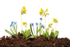 Isolated spring flowers Stock Photos