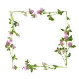 Isolated square frame of clover flowers Royalty Free Stock Photo
