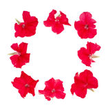 Isolated square frame of red petunia Stock Photo