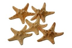 Isolated star fish. Over white Stock Photo
